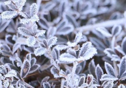 48小时内兰州市大部山区有霜冻
