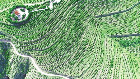 昔日荒山处 今朝花盛开——定西安定区水土保持生态建设实践
