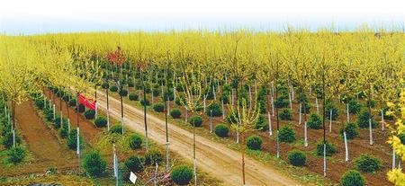泾川:构建生态新景观