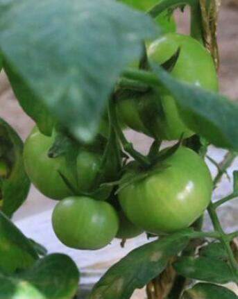 3月份甘肃省蔬菜价格明显下降 农资价格稳中有升