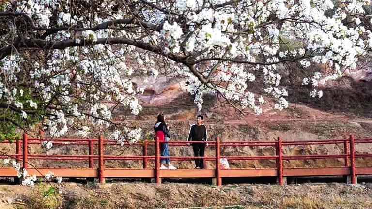 千树梨花始盛开 五彩丹霞等客来