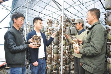 礼县积极发展特色产业 带动群众增收