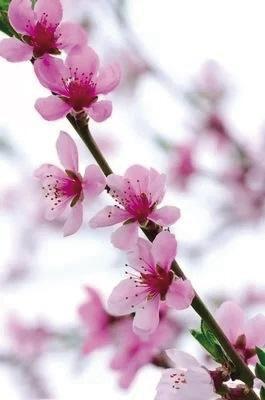 兰州交警发布桃花旅游节出行提示
