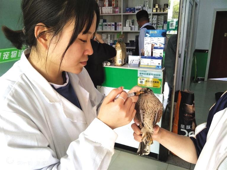 嘉峪关市林草局救助一只国家二级保护动物