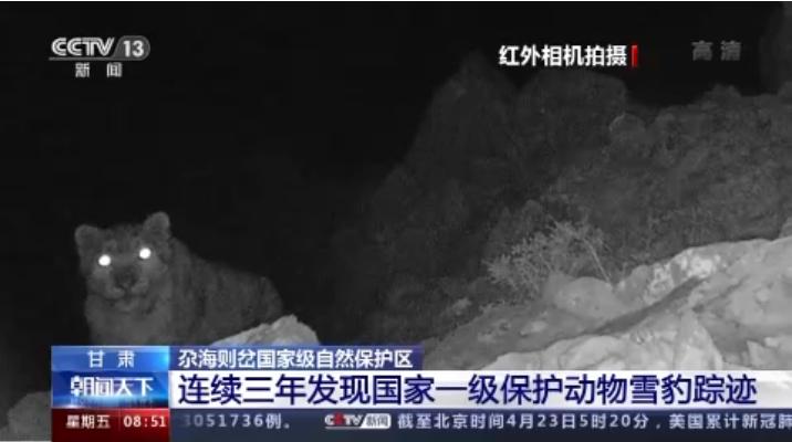 """""""大猫""""出没!甘肃尕海则岔保护区连续三年发现雪豹踪迹"""