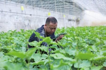 """""""栽种的是菜苗,收获的是希望!""""——陇南两当县豆坪村蔬菜种植见闻"""