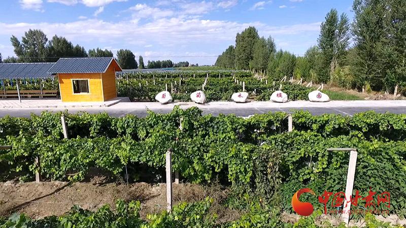 金塔:生态美起来 产业强起来 村民富起来