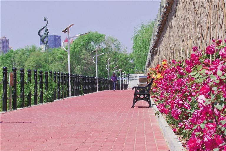 金城兰州:河道健身步道蝶变花海景观长廊