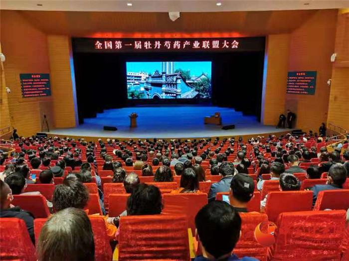 国内专家学者齐聚甘肃临夏市 共话牡丹芍药产业发展