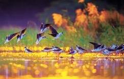 甘肃生物多样性保护取得积极进展