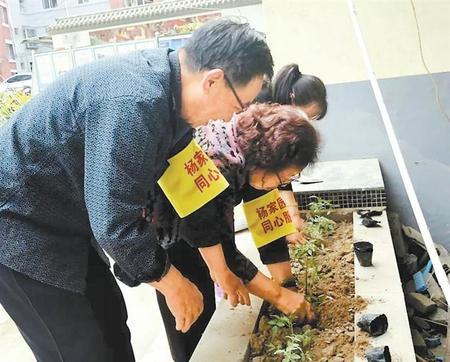 """【微金城】""""共享小菜园""""让邻里更亲近"""