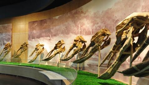 【沿着高速看中国】临夏和政:古生物化石里的生物密码