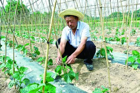 调整农业产业结构 带动农民增收致富