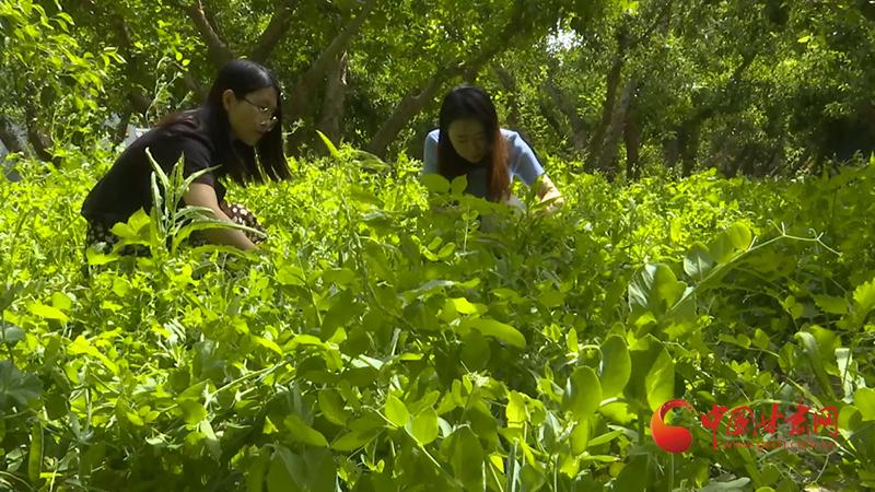 瓜州:农旅融合打造乡村振兴新引擎