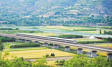 庆阳庆城县25.6万亩丰收的小麦已经进入成熟收割期
