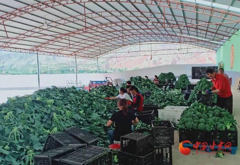 漳县:绿色高原夏菜走俏南方