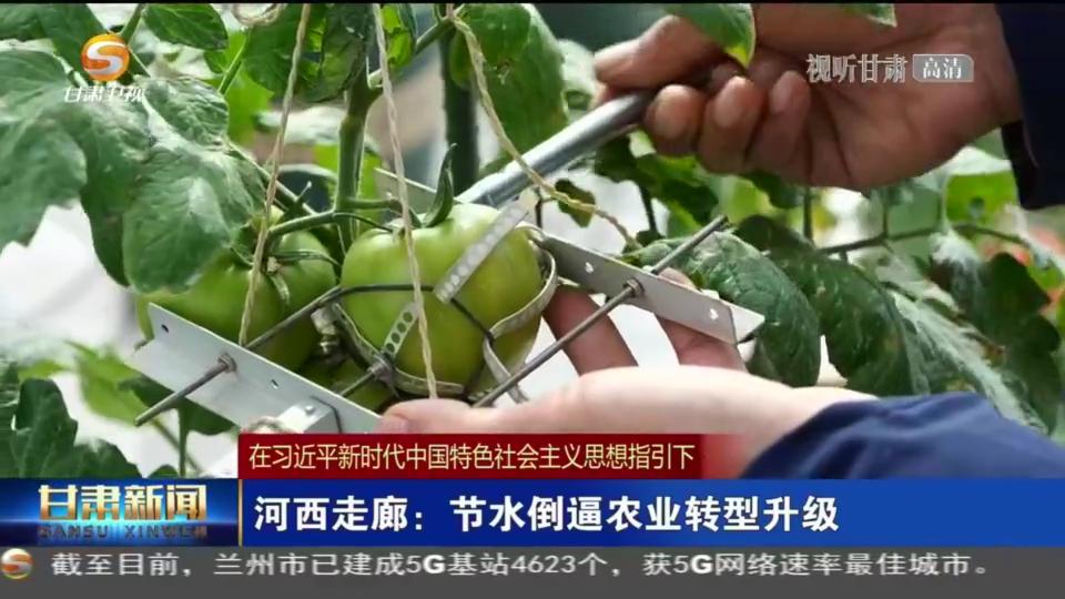 【短视频】(在习近平新时代中国特色社会主义思想指引下)河西走廊:节水倒逼农业转型升级