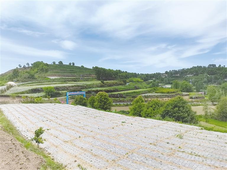 临夏州乡村振兴示范村上王家村——充满希望的田野