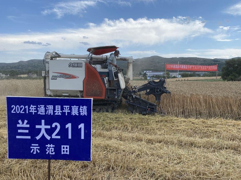 甘肃:旱地冬小麦新品种兰大211 专家实产测定成果喜人