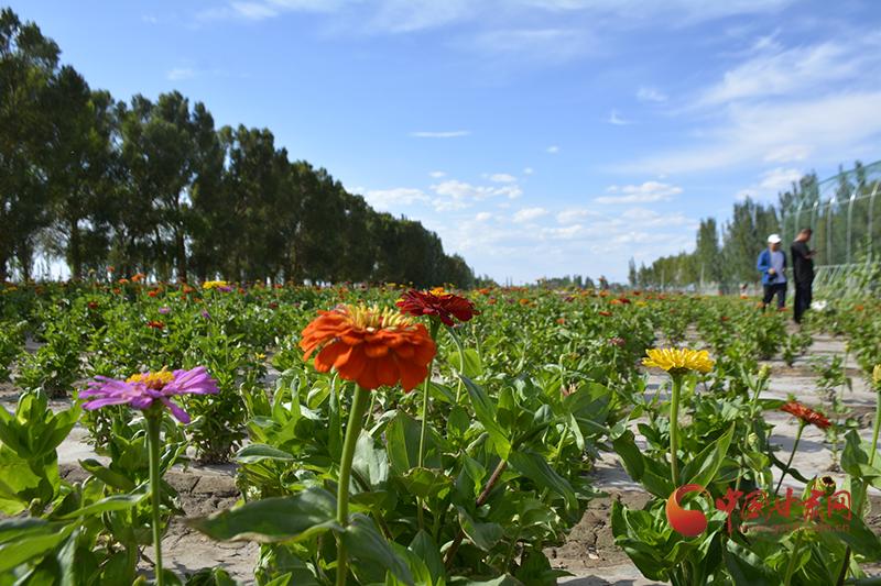 瓜州:农旅融合富路宽
