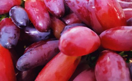 上半年兰州海关监管进口水果145.51吨