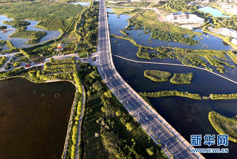 甘肃张掖:夏日湿地风光美