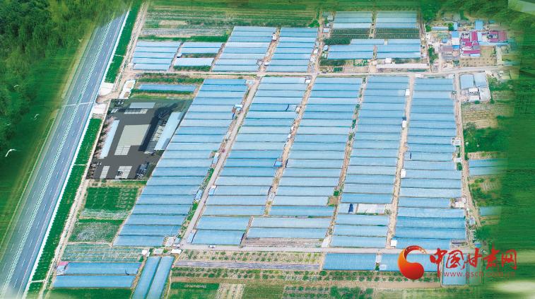 庄浪:打造蔬菜特色产业