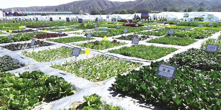 中国·兰州(榆中)高原夏菜新品博览会举办