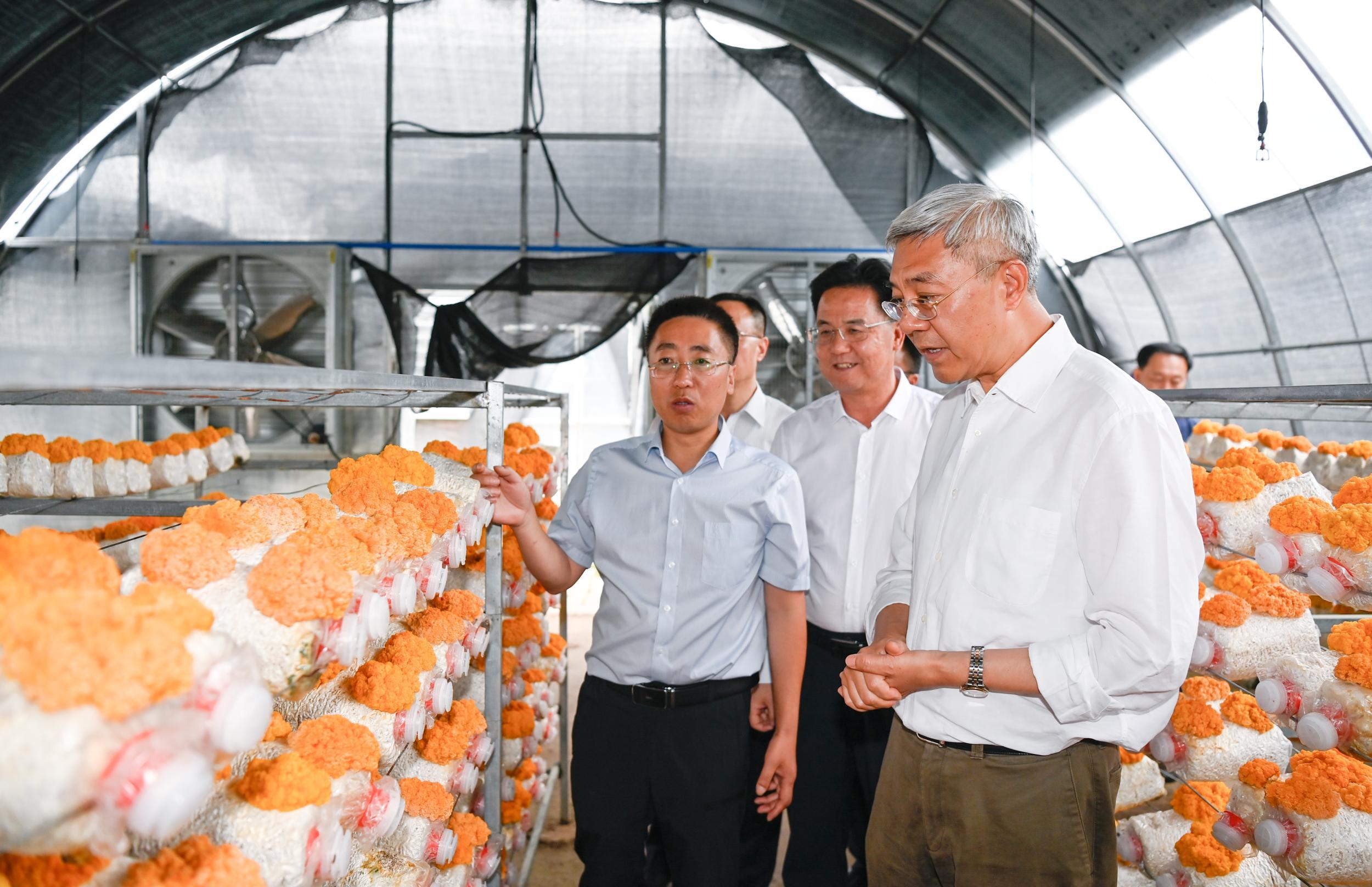 尹弘在定西调研:菌菇产业大有前景 带动群众增收致富