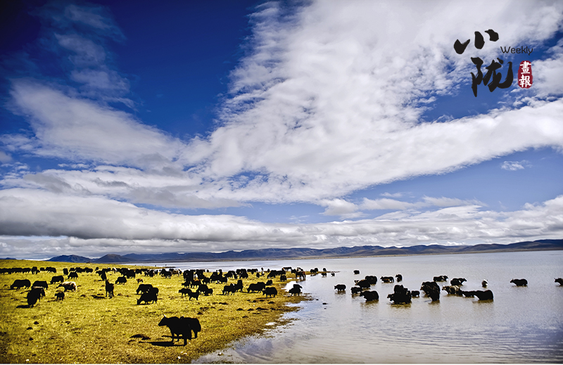【小陇画报·118期】高原明珠尕海湖 绿水青山绘锦绣