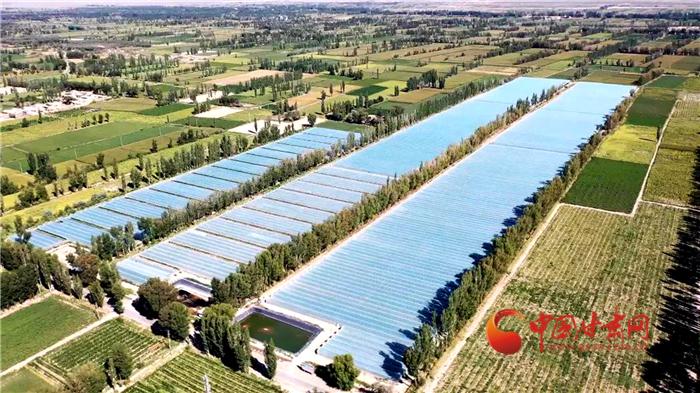 【小康圆梦·看甘肃】酒泉瓜州:高标准农田化零为整 高品质蜜瓜增效增收