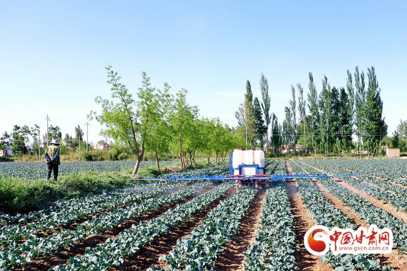 【小康圆梦·看甘肃】临泽平川镇:特色产业兴 致富路更宽