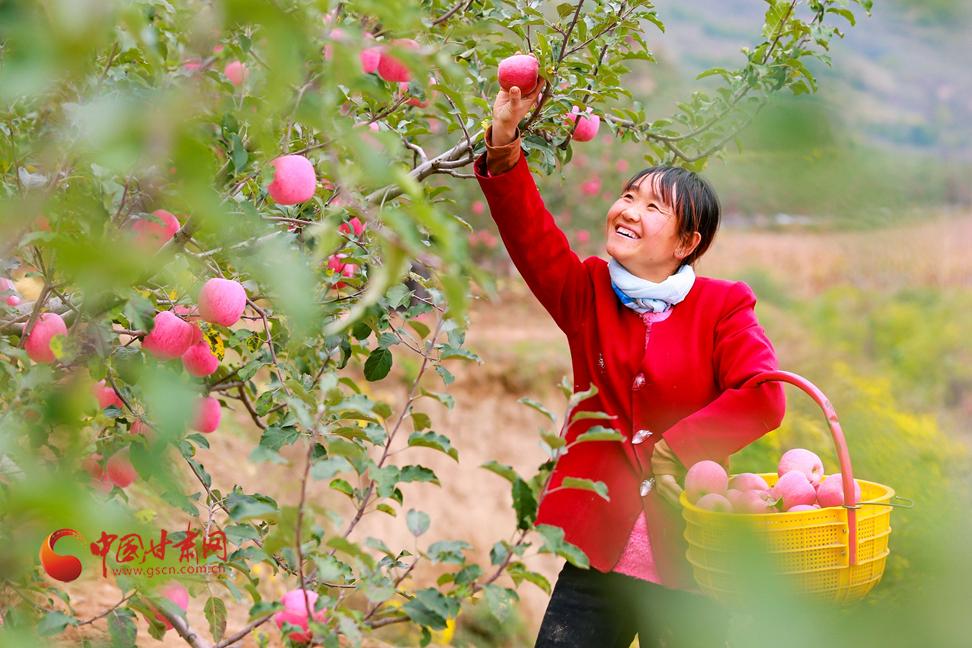 """【走进乡村看小康】甘肃静宁:""""小苹果""""撑起县域经济""""脊梁"""""""