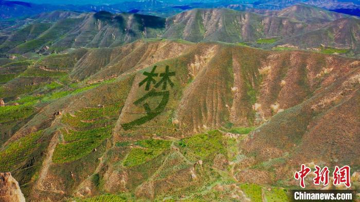 图为榆中县荒山遍绿植。  彭昱 摄