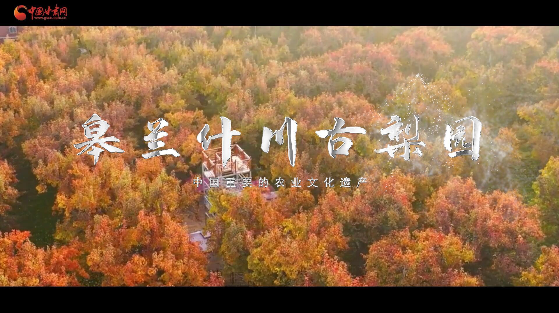 """陇上有名(四十五)丨""""中国重要的农业文化遗产""""皋兰什川古梨园"""