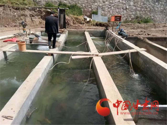 兰州榆中:马坡乡成功养殖虹鳟鱼 每斤20元销路有保障