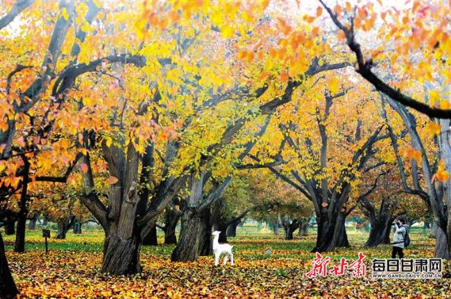 【陇原秋意】官鹅沟、兴隆山、什川梨园 山水之间看秋色尽染