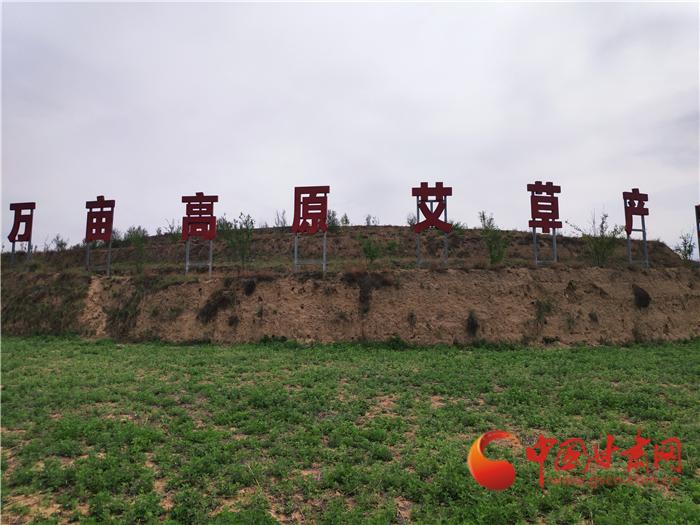 甘肅省(sheng)出口中(zhong)藥(yao)材839.3噸