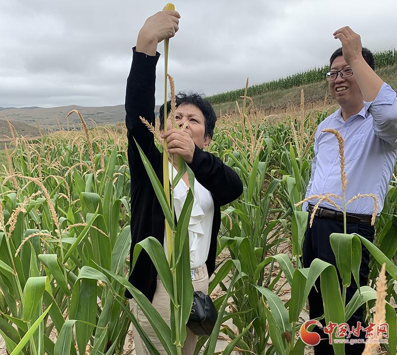 """甘肃一位农气专家的""""人工增雨图"""""""