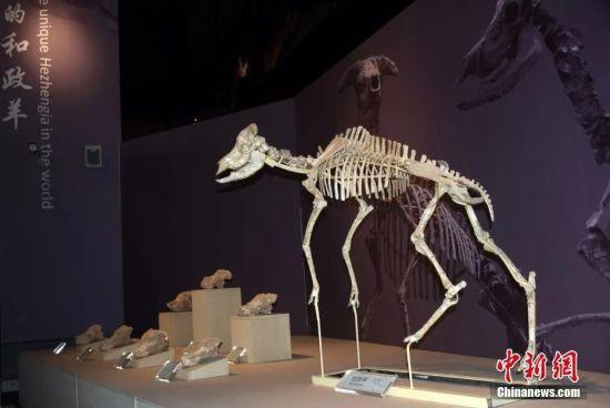 东西问 邓涛:数万史前动物化石为何在西北密集出现?