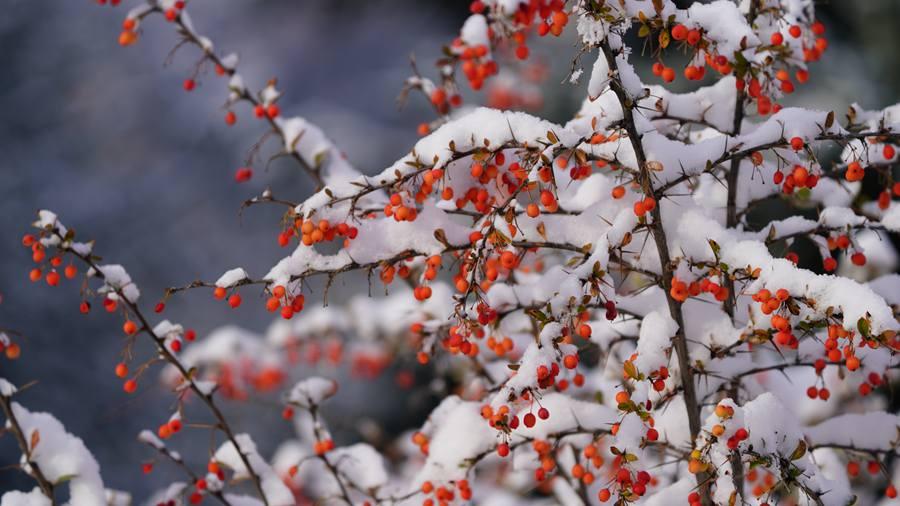 甘肃肃南:秋雪美景宛若童话