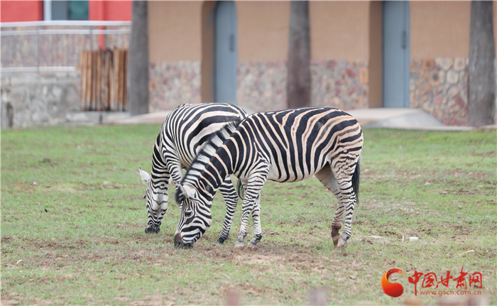 试开园以来兰州野生动物园已接待游客达15万人次