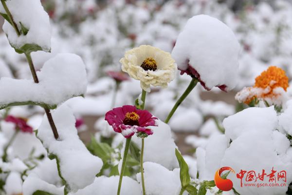 瑟瑟发抖!甘肃省大部降温6-8度 部分地区迎来降雪