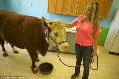 奶牛整日与狗相伴自认同类 对吃草没兴趣