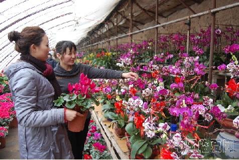 花卉市场生意兴隆_中国甘肃网