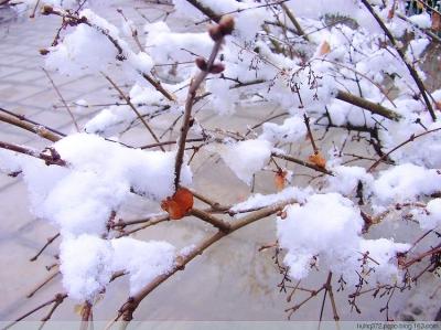 甘肃社会综合 正文                        有人说,冬天的风景是萧瑟